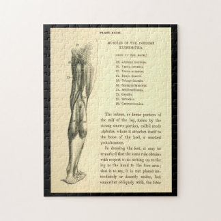 Músculos de la pierna de la anatomía el | del puzzle