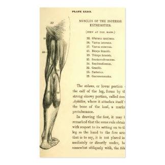 Músculos de la pierna de la anatomía el   del plantillas de tarjetas de visita