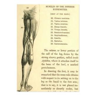Músculos de la pierna de la anatomía el | del tarjetas de visita grandes