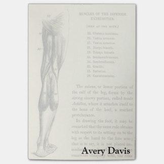 Músculos de la pierna de la anatomía el   del notas post-it