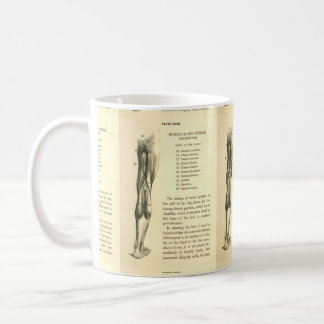 Músculos de la pierna de la anatomía el   del taza de café
