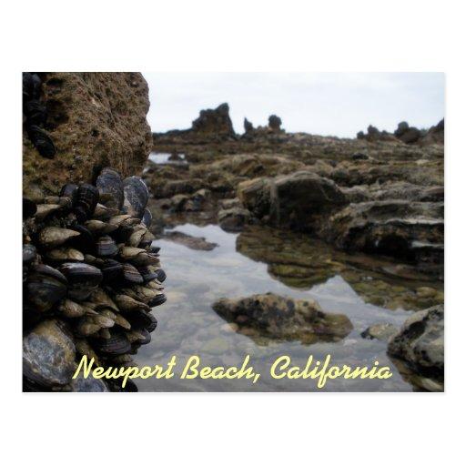 Músculos de la playa de Newport Postal