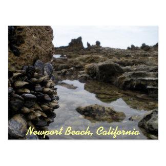 Músculos de la playa de Newport Tarjeta Postal