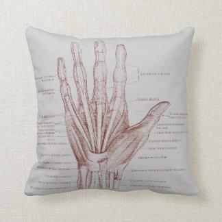 Músculos de los dedos de la mano - anatomía cojín