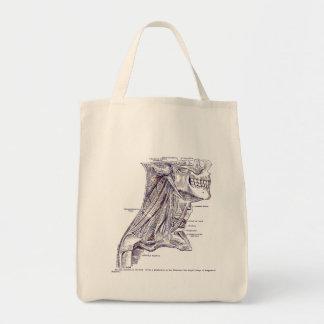 Músculos del arte de la anatomía del vintage de la
