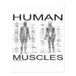 Músculos humanos y anatomía postales