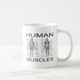 Músculos humanos y anatomía taza