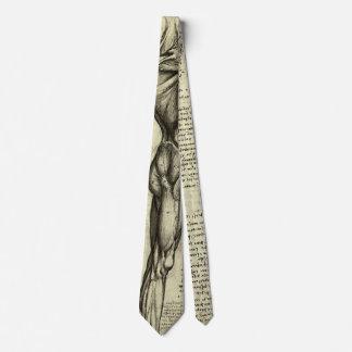 Músculos masculinos de la anatomía humana de corbatas