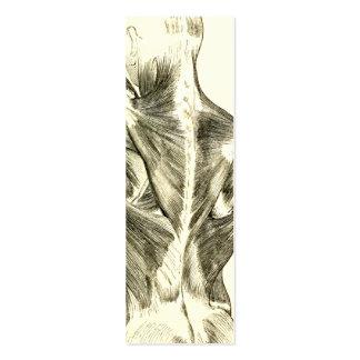 Músculos traseros de la anatomía el | del vintage tarjetas de visita mini