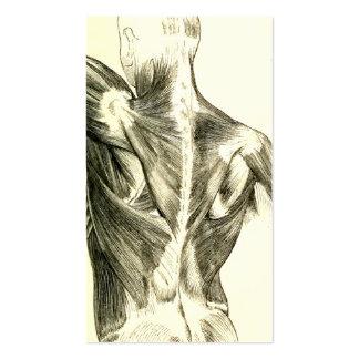Músculos traseros de la anatomía el | del vintage tarjetas de visita