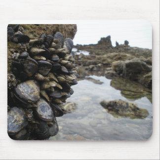 Músculos y rocas en la playa de Newport Alfombrilla De Ratones