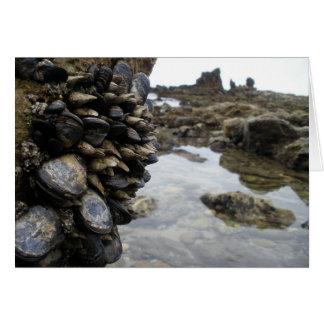 Músculos y rocas en la playa de Newport Felicitación