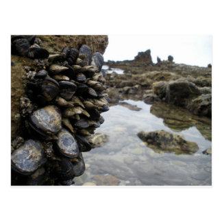 Músculos y rocas en la playa de Newport Tarjetas Postales