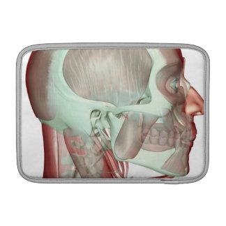 Musculoskeleton de la cabeza y del cuello 2 fundas para macbook air
