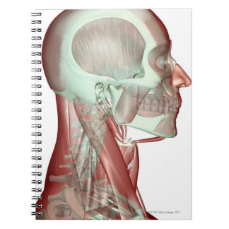 Musculoskeleton de la cabeza y del cuello 2 libreta espiral