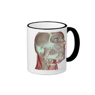 Musculoskeleton de la cabeza y del cuello 3 taza de café