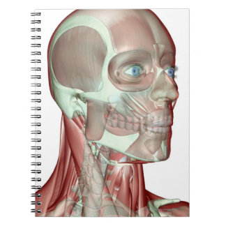 Musculoskeleton de la cabeza y del cuello 5 libros de apuntes con espiral