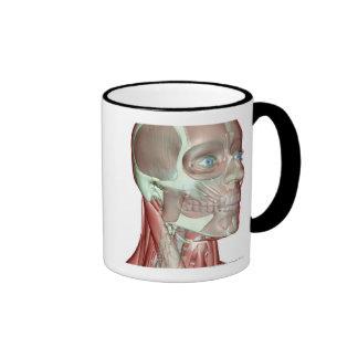 Musculoskeleton de la cabeza y del cuello 5 tazas de café
