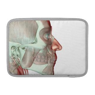 Musculoskeleton de la cabeza y del cuello 6 fundas para macbook air