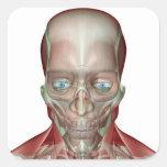 Musculoskeleton de la cabeza y del cuello 7 pegatina cuadrada