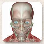 Musculoskeleton de la cabeza y del cuello 7 posavasos