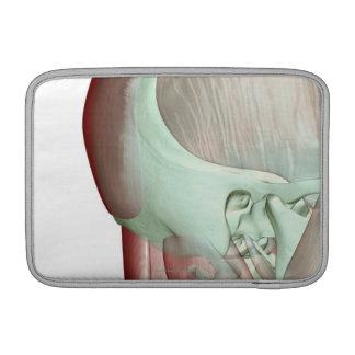 Musculoskeleton de la cabeza y del cuello 8 fundas MacBook