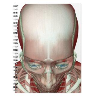 Musculoskeleton de la cabeza y del cuello libros de apuntes con espiral