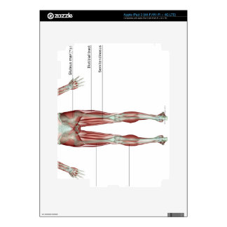 Musculoskeleton de la parte inferior del cuerpo iPad 3 pegatina skin