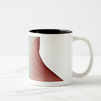 Musculoskeleton del cuello 2 taza de café