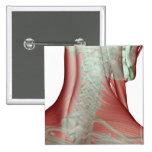 Musculoskeleton del cuello 3 pin
