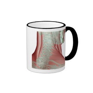 Musculoskeleton del cuello 3 tazas de café