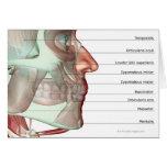Musculoskeleton del mandíbula 2 tarjeton