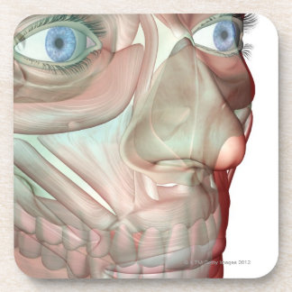 Musculoskeleton of the Face 2 Coaster