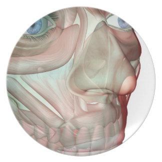 Musculoskeleton of the Face 2 Plates