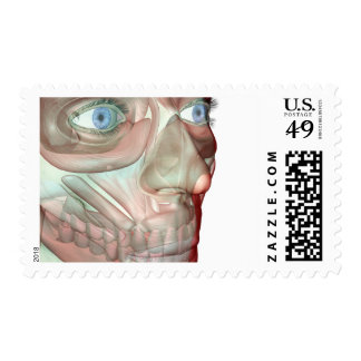 Musculoskeleton of the Face 2 Postage Stamps