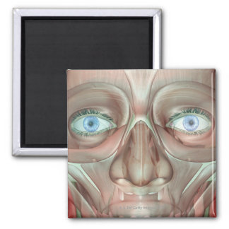 Musculoskeleton of the Face 3 2 Inch Square Magnet