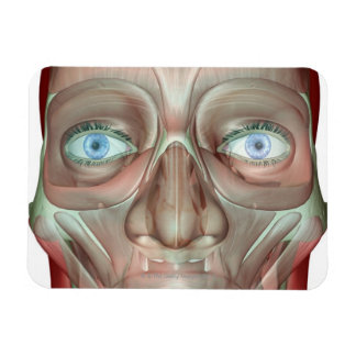 Musculoskeleton of the Face 3 Rectangular Photo Magnet
