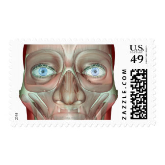 Musculoskeleton of the Face 3 Stamp