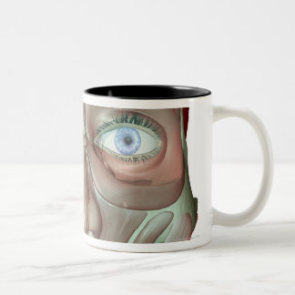 Musculoskeleton of the Face 3 Two-Tone Coffee Mug