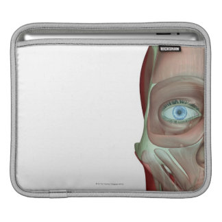 Musculoskeleton of the Face iPad Sleeve