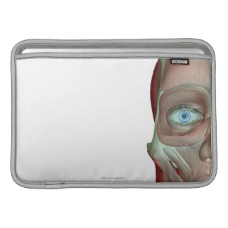 Musculoskeleton of the Face MacBook Air Sleeve