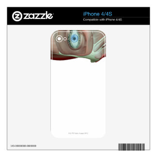 Musculoskeleton of the Face Skin For iPhone 4
