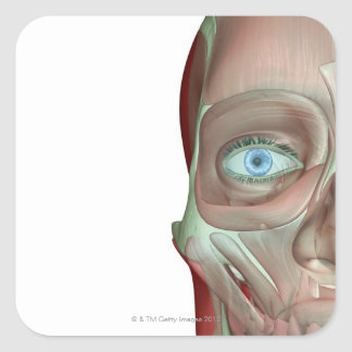 Musculoskeleton of the Face Square Sticker