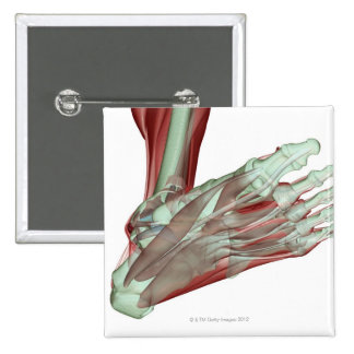 Musculoskeleton of the Foot 2 2 Inch Square Button