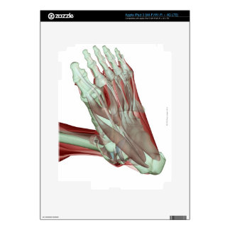 Musculoskeleton of the Foot 2 iPad 3 Skins