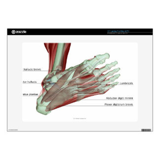 """Musculoskeleton of the Foot Decal For 15"""" Laptop"""