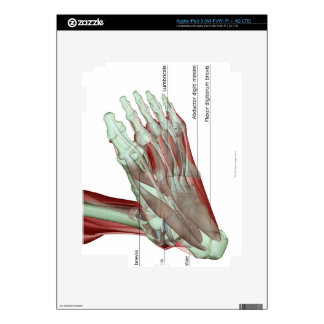 Musculoskeleton of the Foot Decals For iPad 3