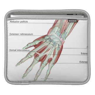 Musculoskeleton of the Hand iPad Sleeves