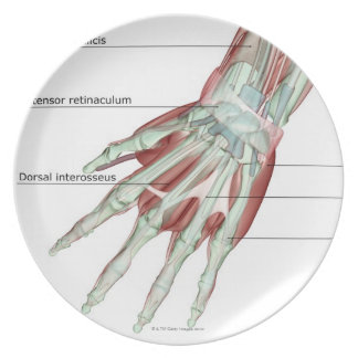 Musculoskeleton of the Hand Plate