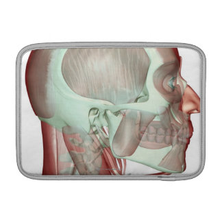 Musculoskeleton of the Head and Neck 2 Sleeve For MacBook Air